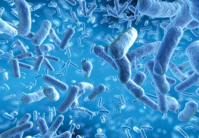18-NUR-4481-bacteriaInfections-650x450